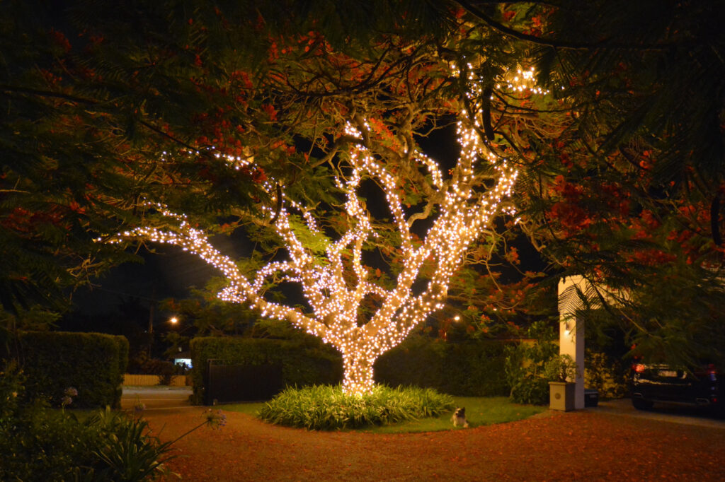 Beautiful tree wrapped in warm fairy lights in a front yard